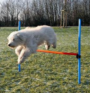 Dog Agility Jump - Adjustable Height Trixie Agility Equipment