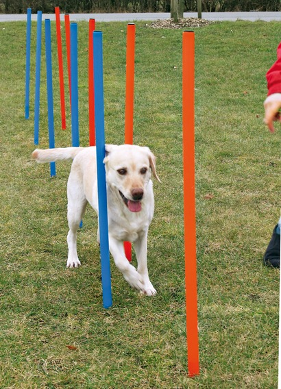 Trixie Dog Agility Weave Poles 115cm Tall with Ground Spike