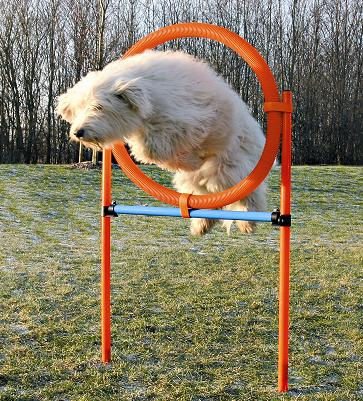 Tire Agility Jump, Dog Hoop Fully Adjustable Height