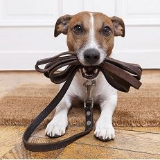 shop dog leads